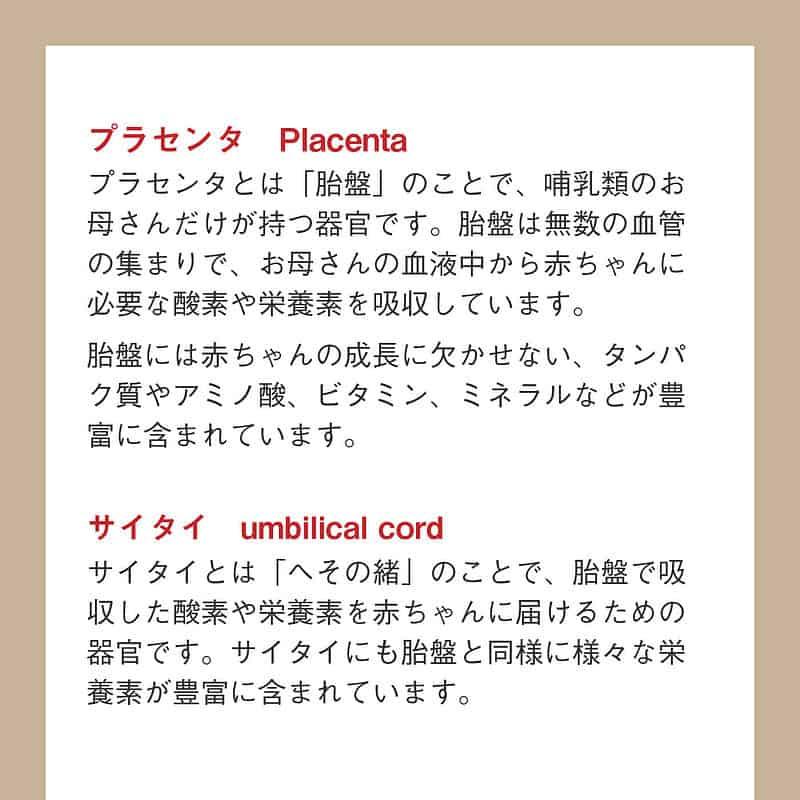 プラセンタと臍帯